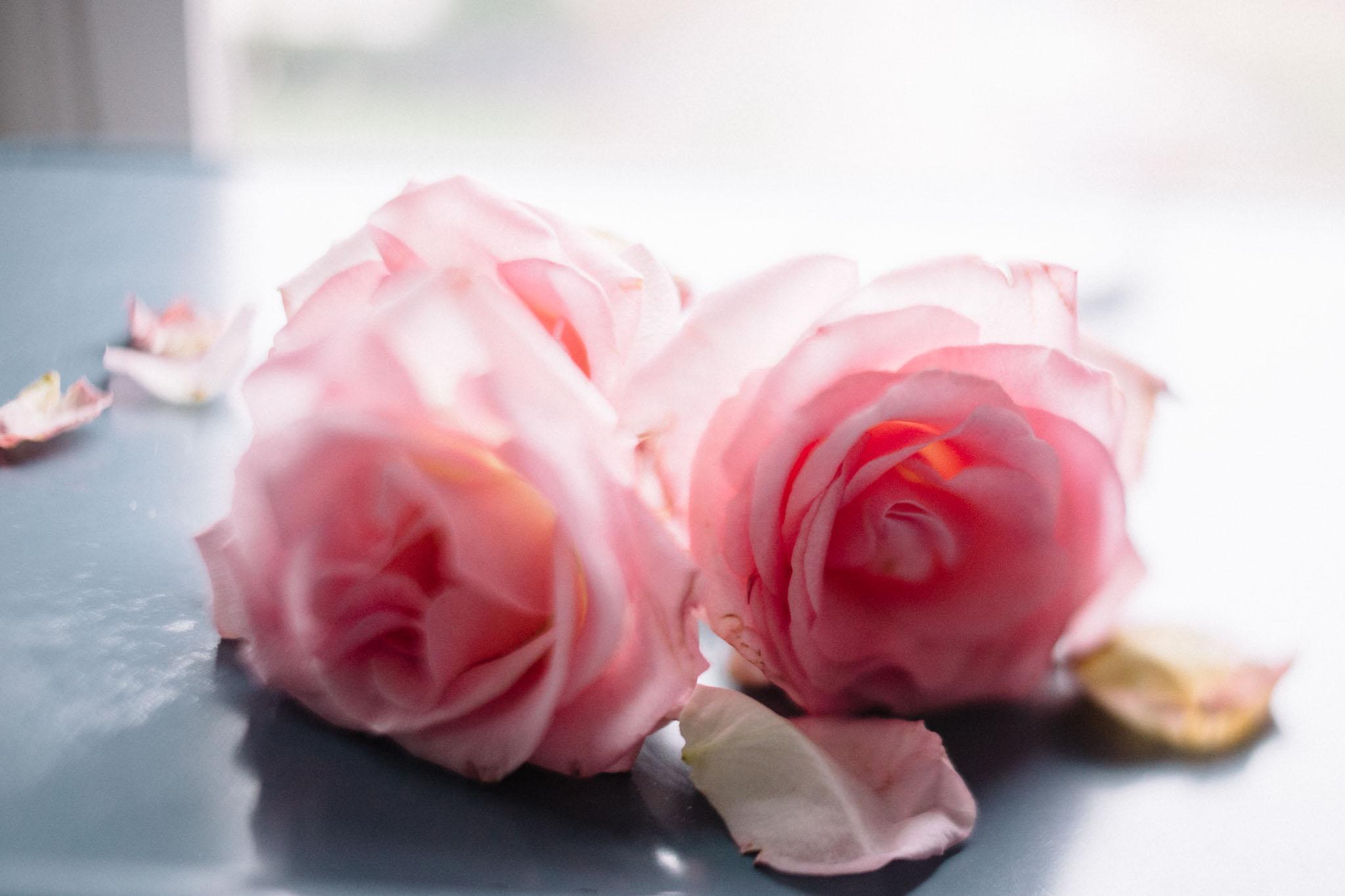 Jamie V. photography freelensed roses