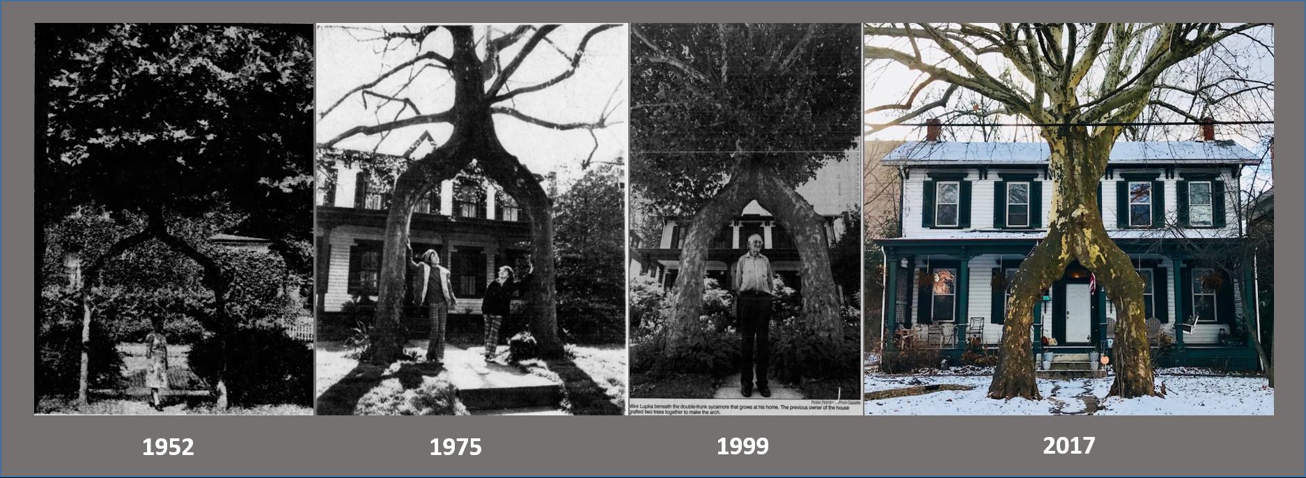 Tree Timeline.png