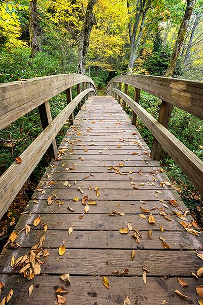 Bridge along the Rough Ridge Trail