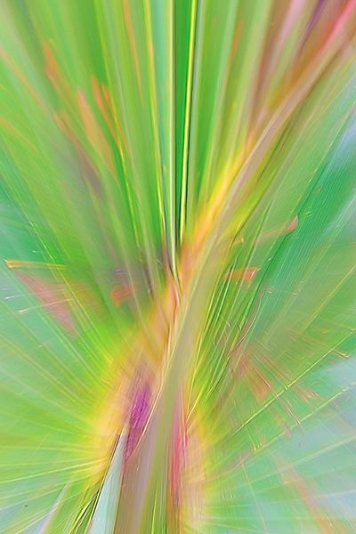 Palmetto Leaf zoom blur Top Glow Whisker TopImprLiqLine.jpg