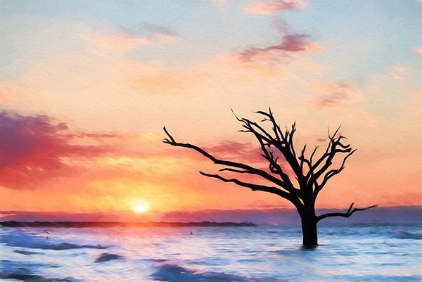 Botany Bay Summer Sunrise Lone Tree TopImp.jpg