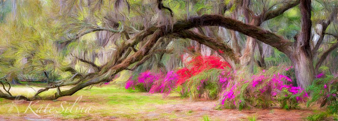 Magnolia Azalea and Live Oak Row Pano GG TopImpr Pastel1.jpg