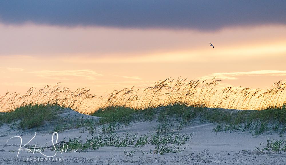 Folly Sunset Sand dunes and bird lg.jpg