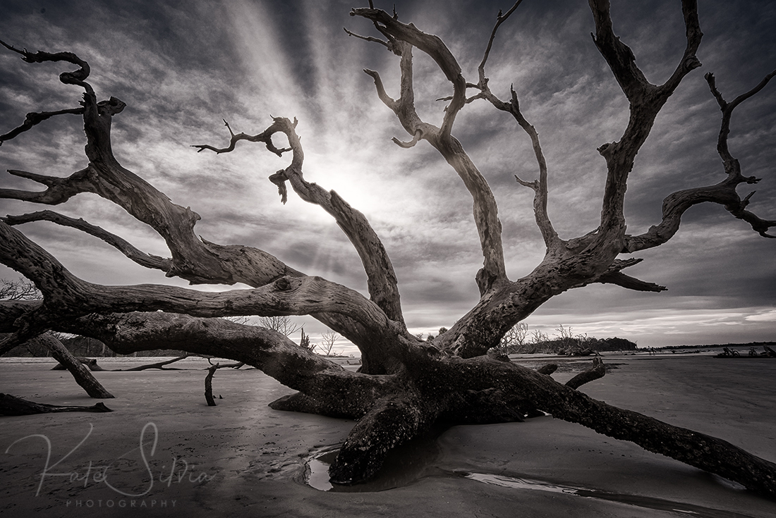 Jekyll Island Driftwood BW.jpg