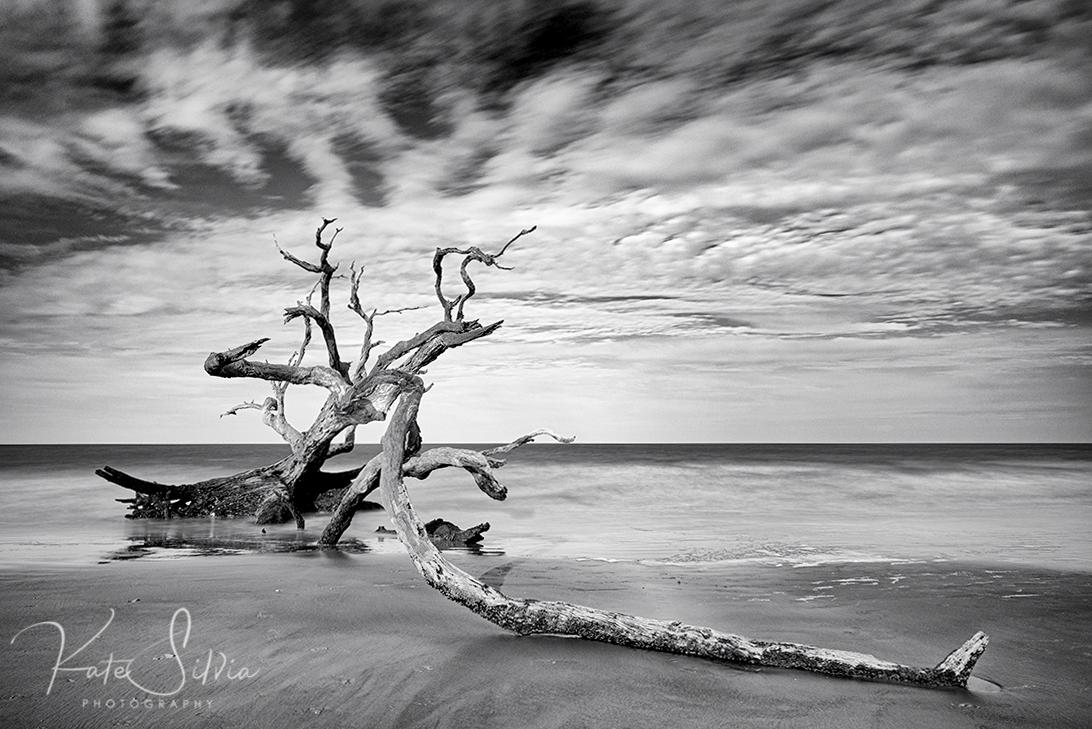 Jekyll Island Driftwood Beach 10 stop ND.jpg