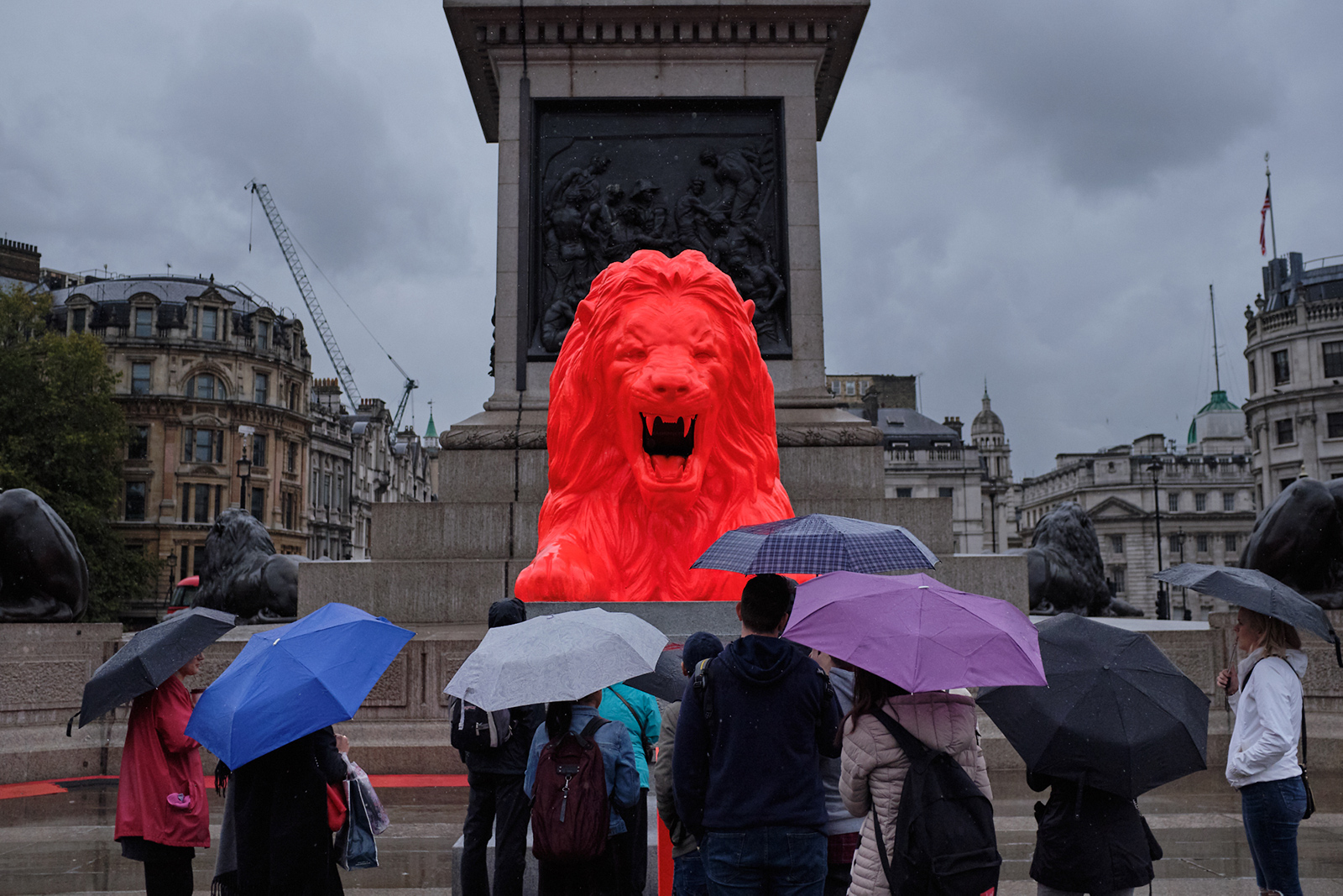 King Of The Proud  A rare glimpse of the Great British, fluorescent orange lion on an otherwise casually wet day.