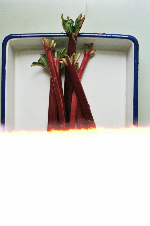 yossy arefi-3-4.jpg
