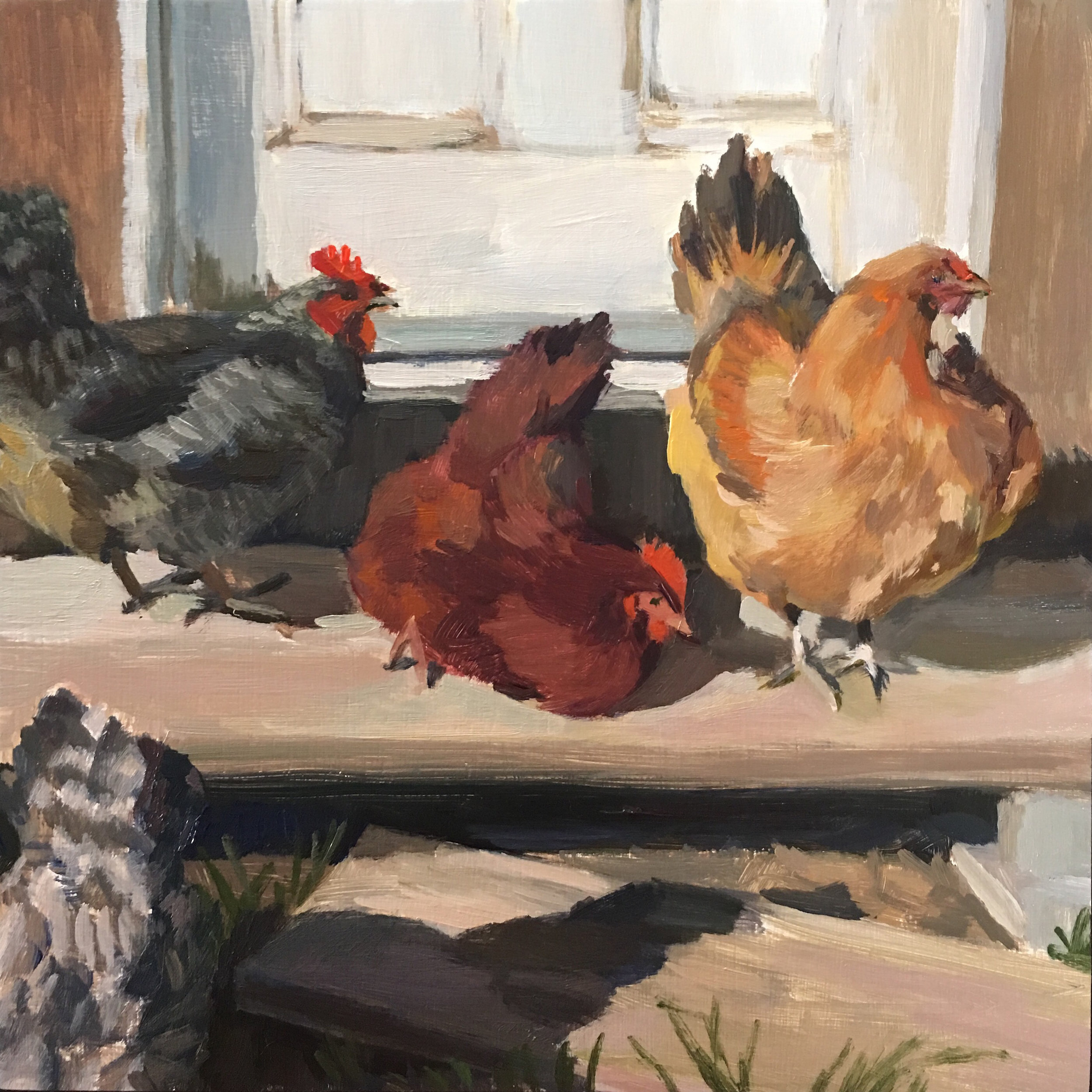 Chickens in the Sun