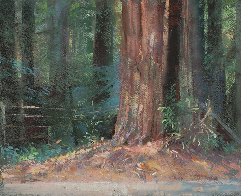 Canyon Redwood