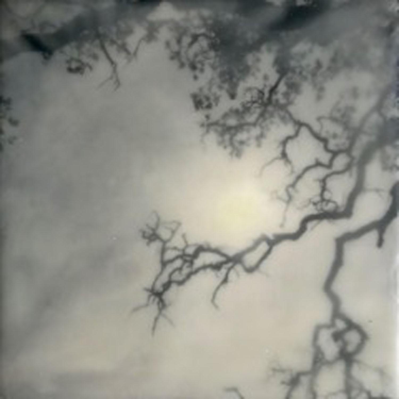 Tree with Sunlight