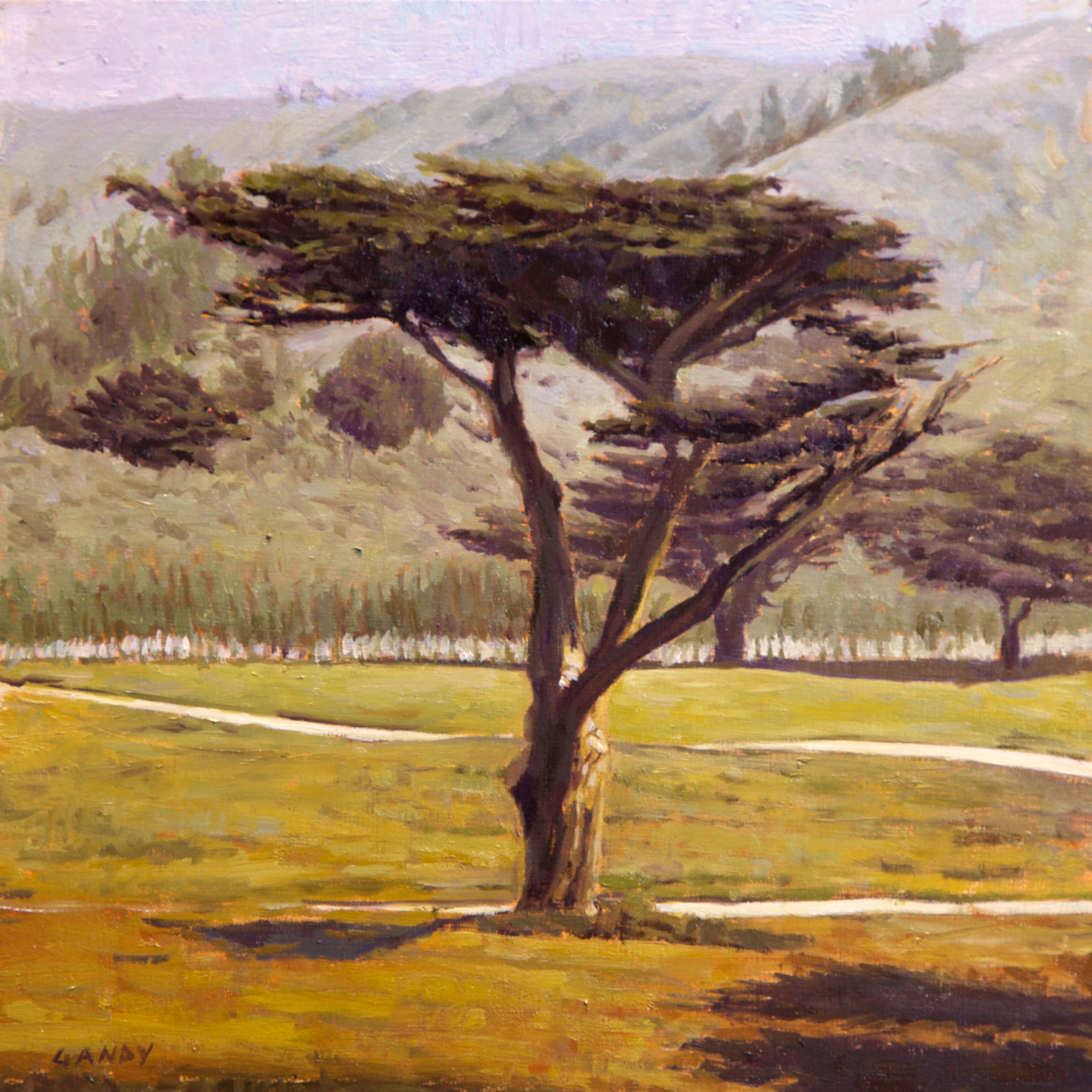 Pacifica Cypress