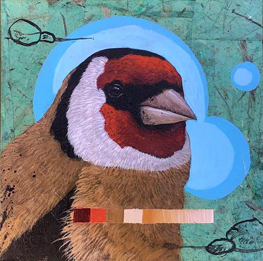 Finch #3
