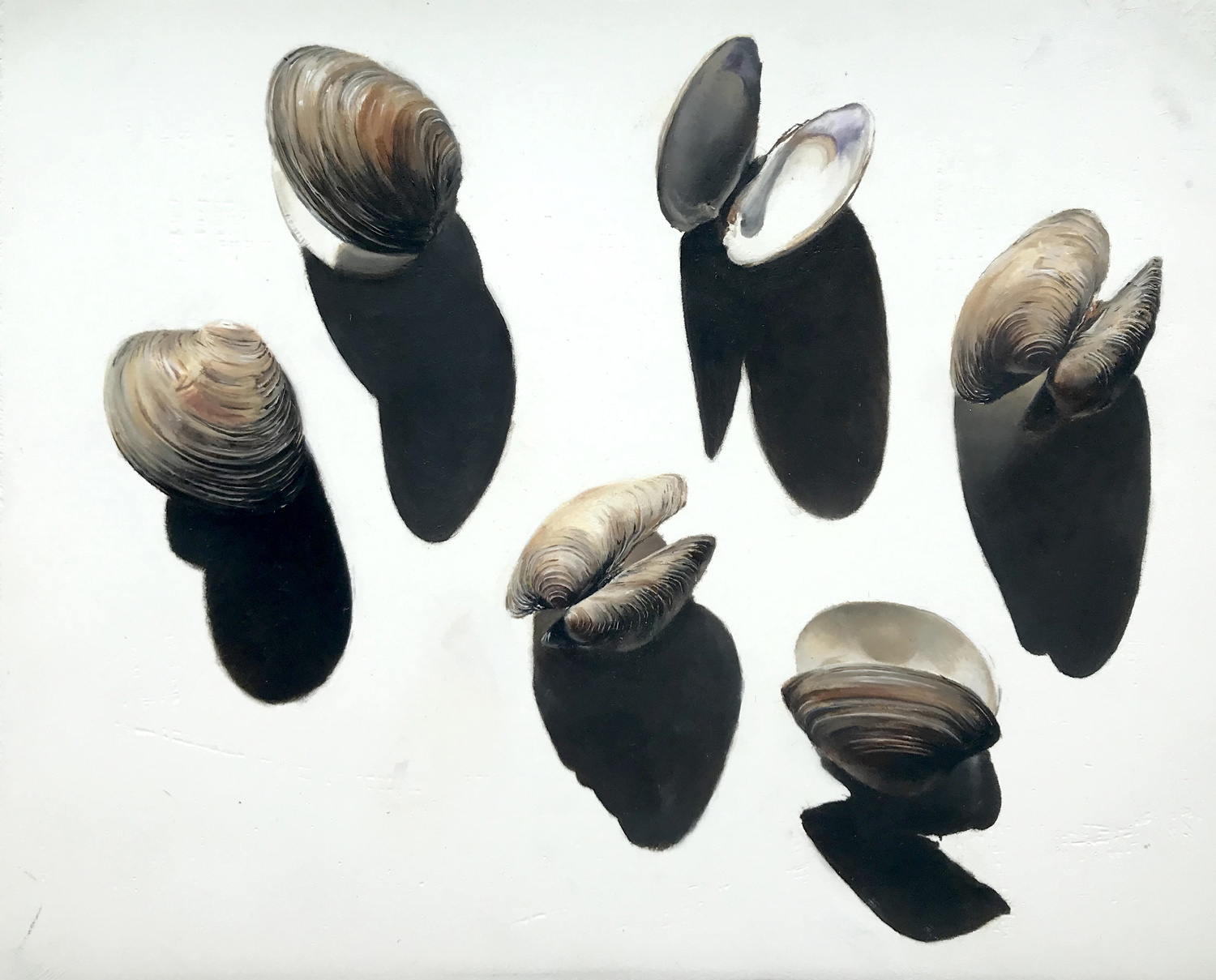 Clam Shells and Their Shadows