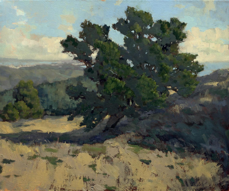 Mt. Tam Oak