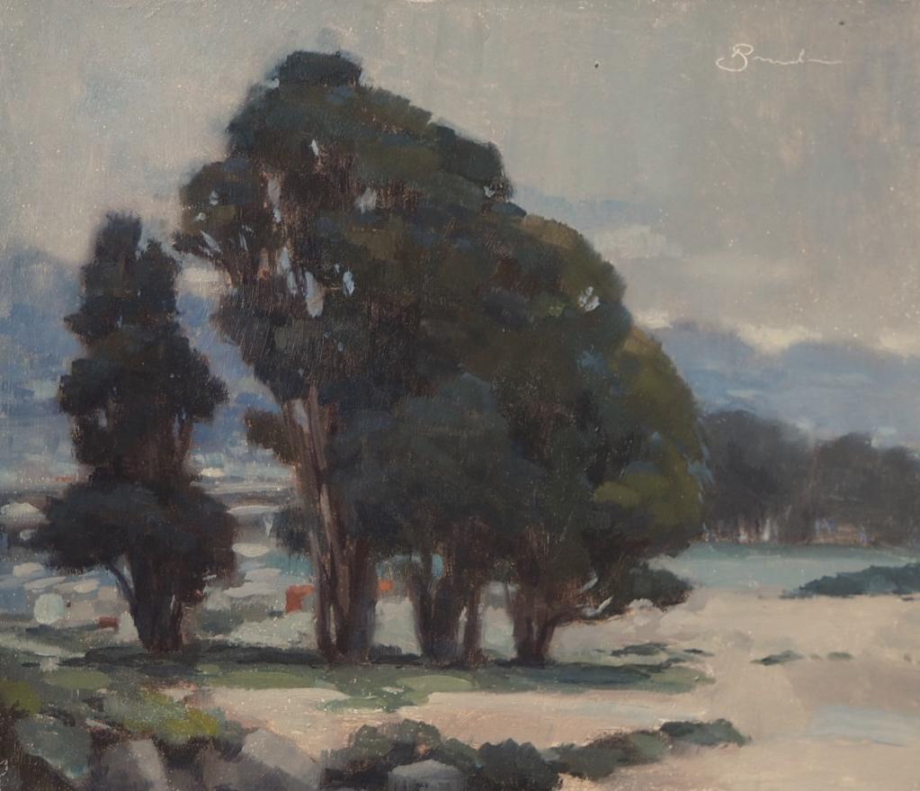 Albany Eucalyptus