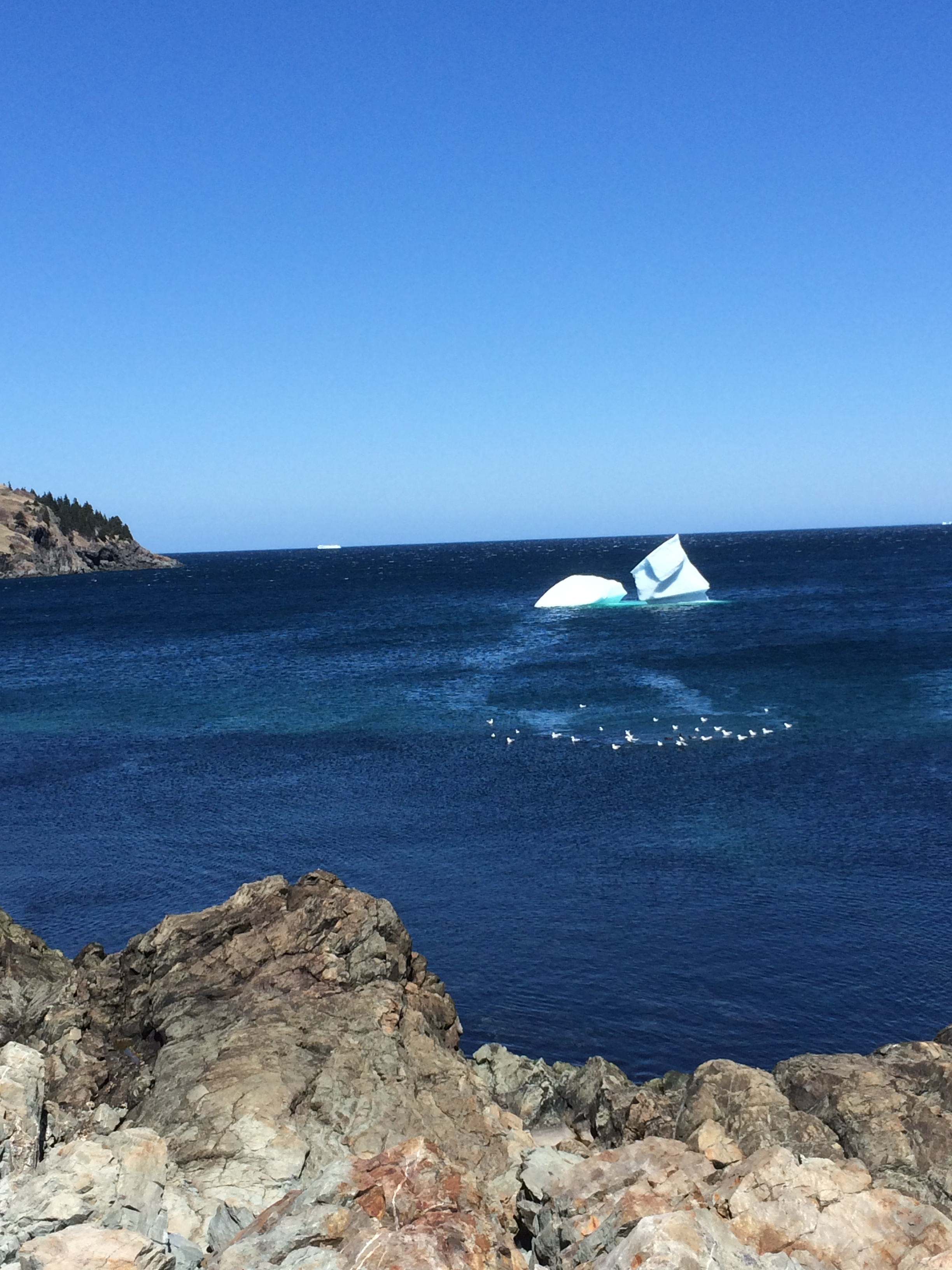 The beautiful inlet of the real Torbay. This iceberg probably melted a little faster as it entered the outflow from a sewer pipe. Note the congregation of seagulls. Ahem