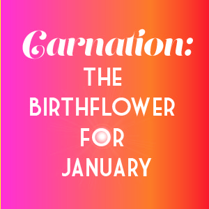 JANUARY BIRTHFLOWER CARNATION.jpg