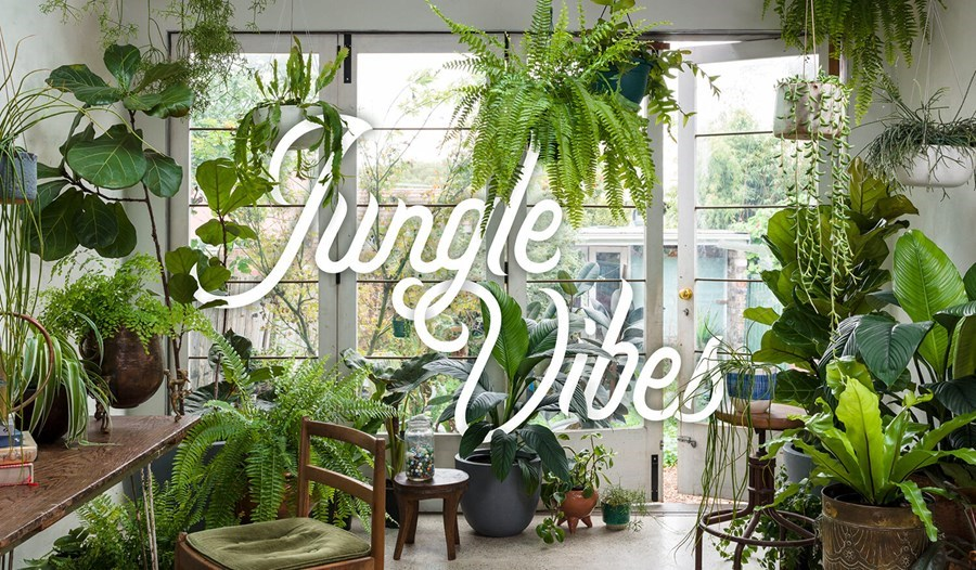 Incorporating pot plants in your home can make you healthier