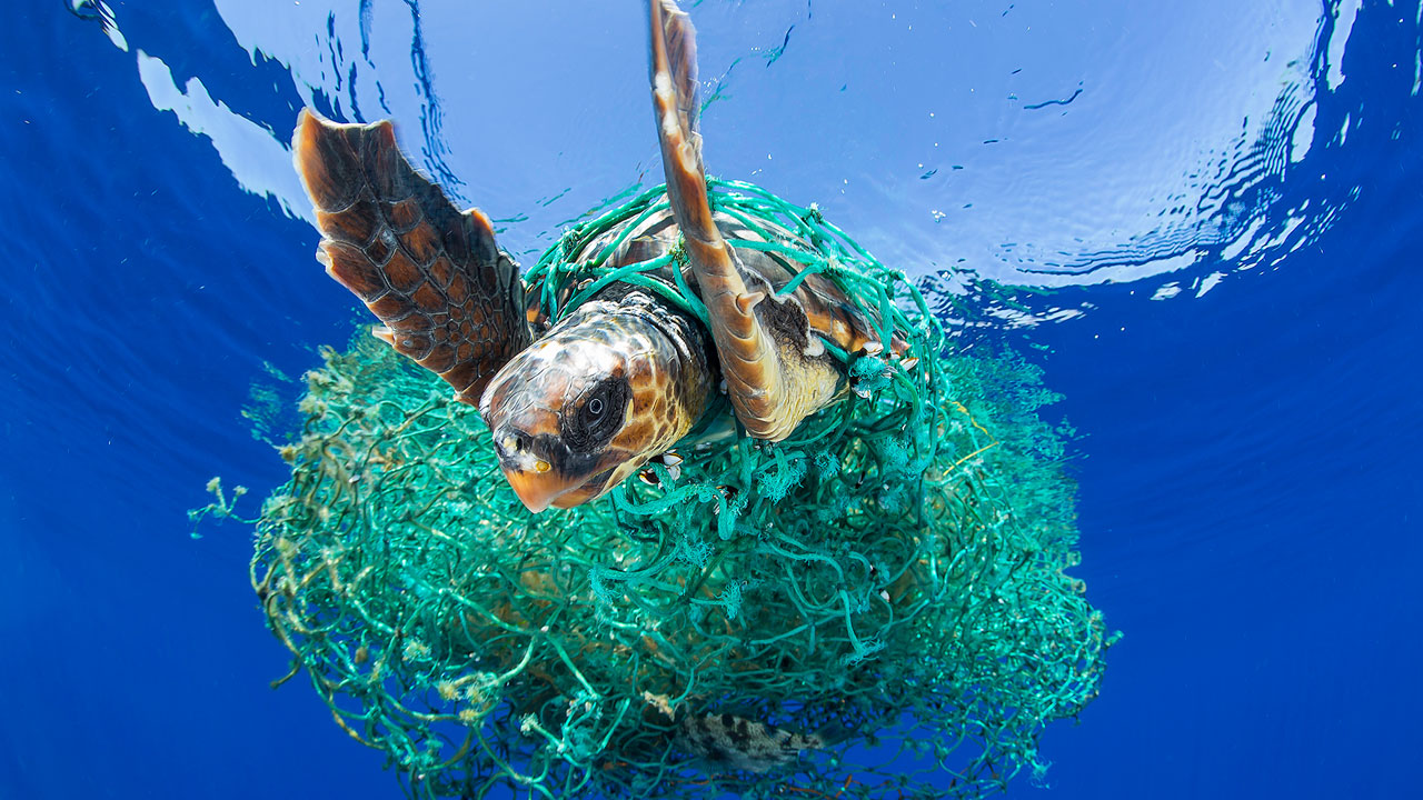 impacts-of-plastic-in-the-ocean-on-sealife-Entangled_Turtle_by_Francis_Perez.jpg