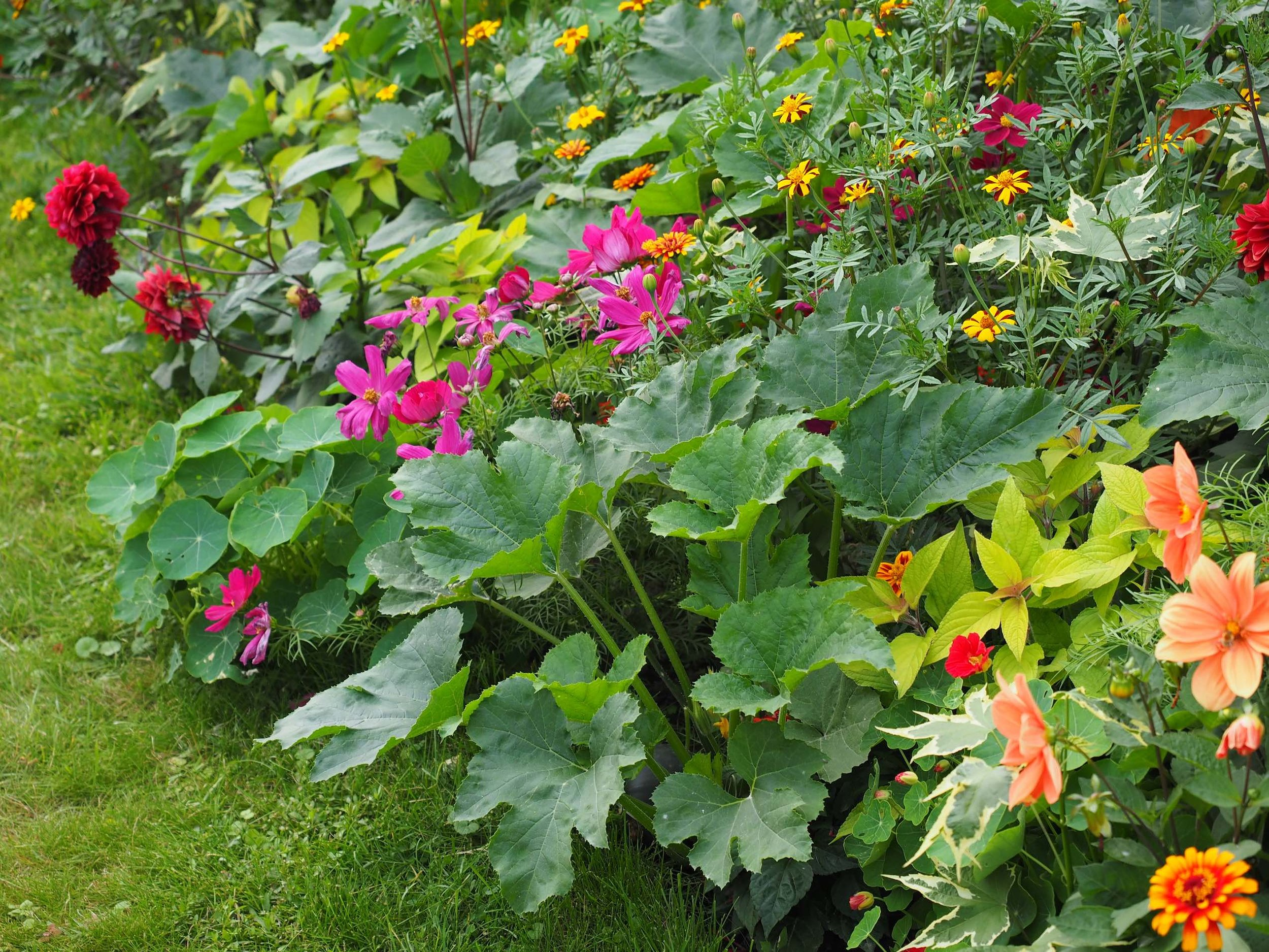 garden for bees.jpg