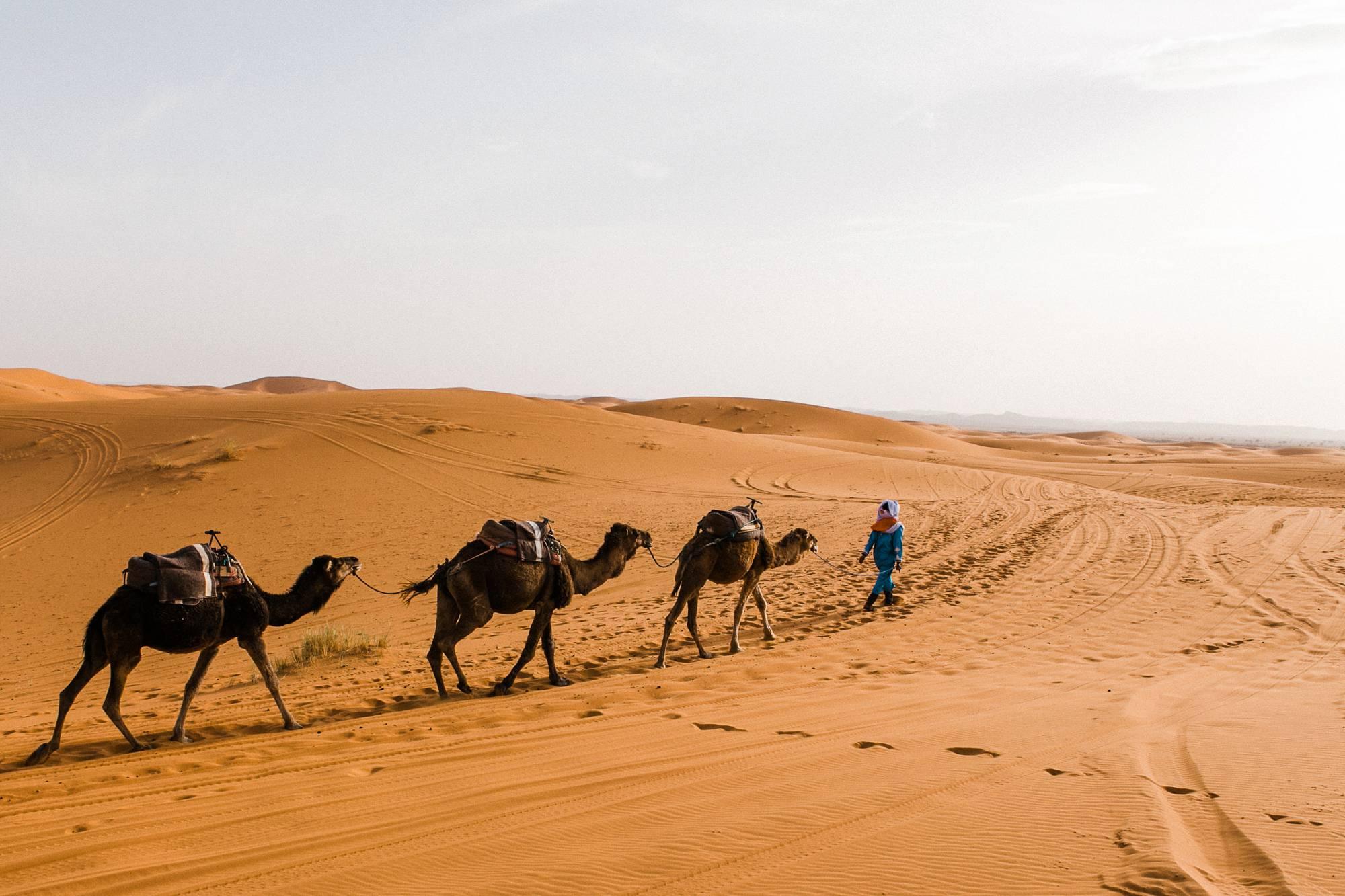 Camels Morocco Sahara