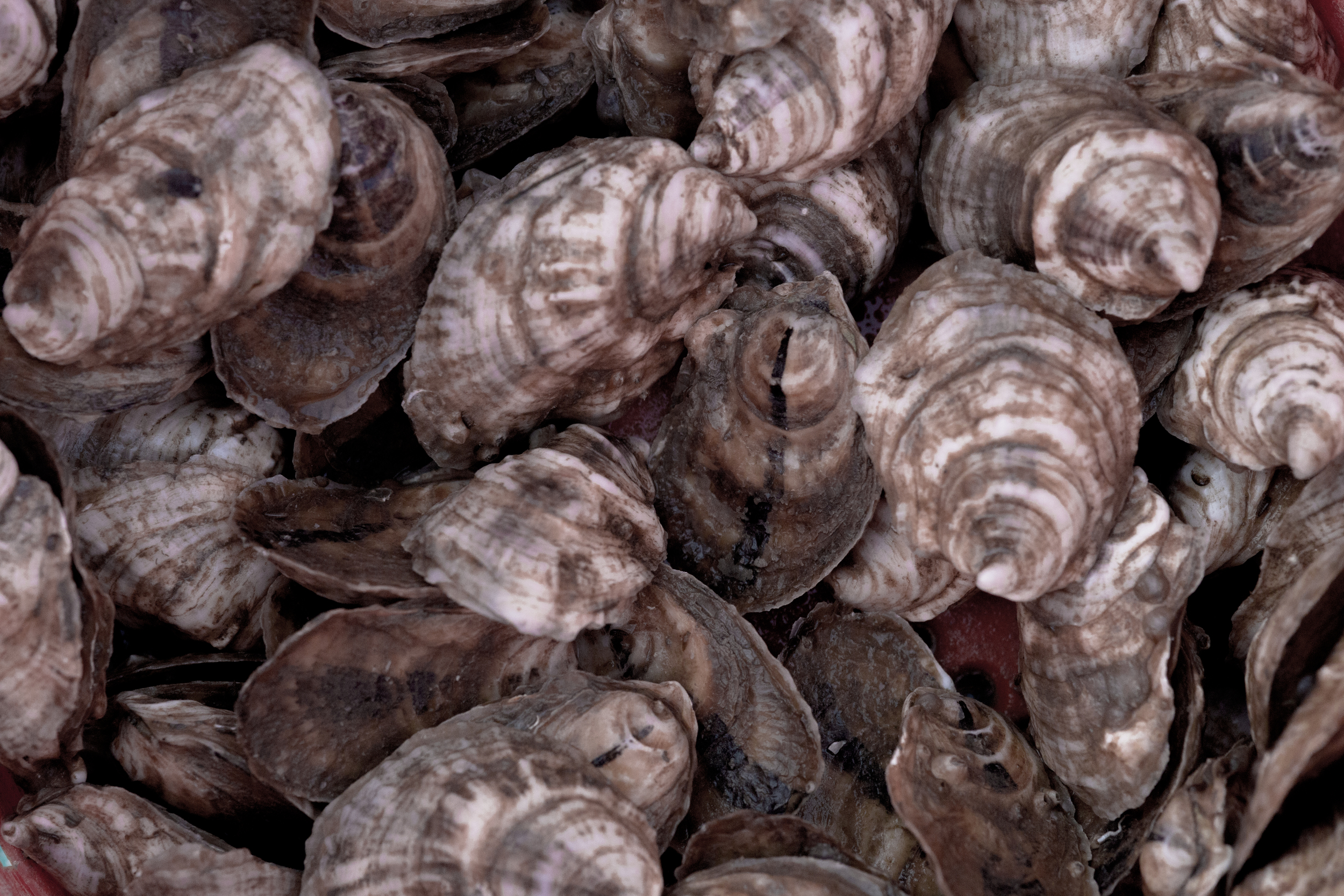 Tangier_Oysters_1Z1A0123.jpg