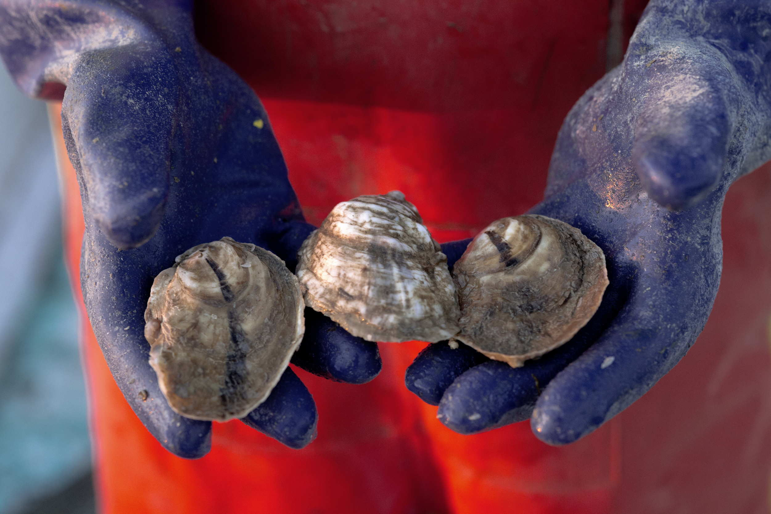 Tangier_Oysters_1Z1A0138.jpg