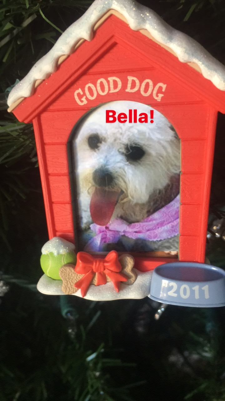 Bella's first Christmas in her forever home...Christmas 2011!
