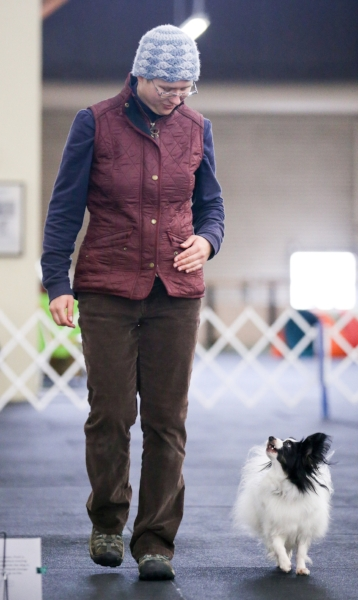 juniper zen rally free dog training