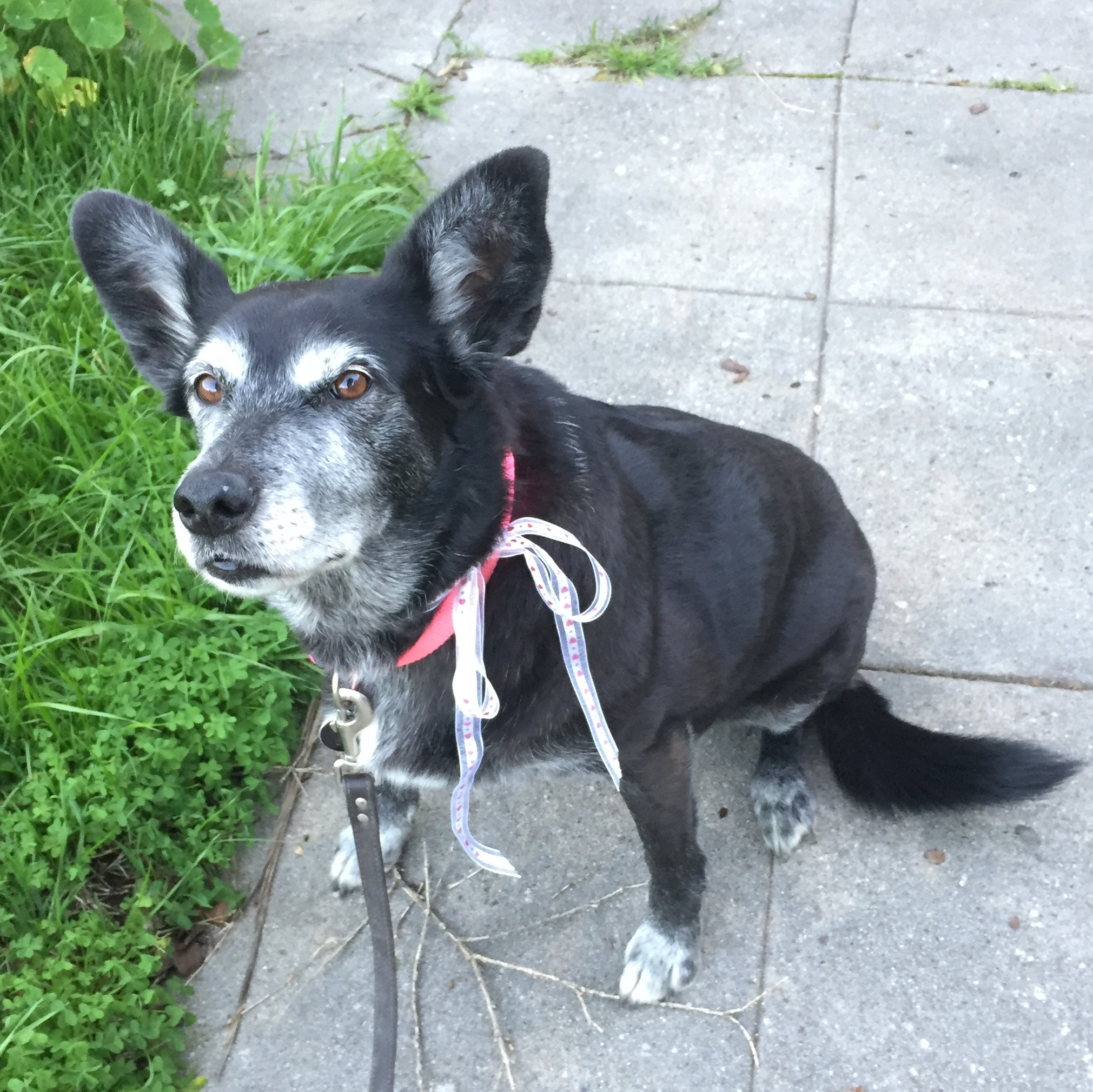 dog sit training adopt rescue