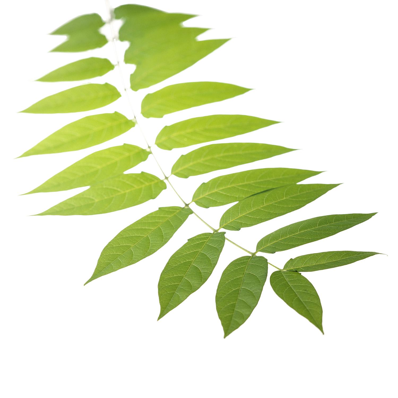 GreenSprig.02.jpg