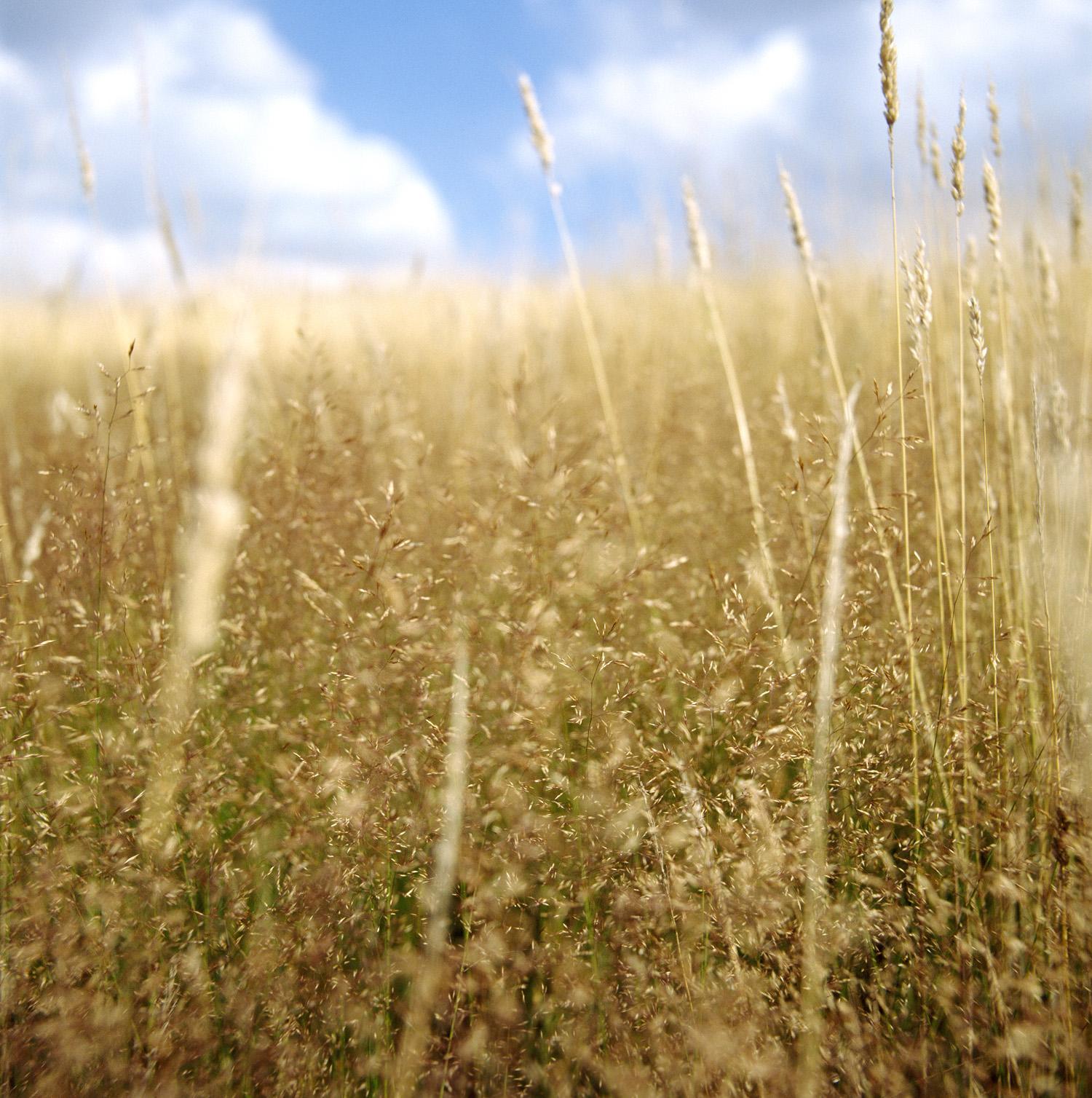 Grasses.SWC.03.jpg