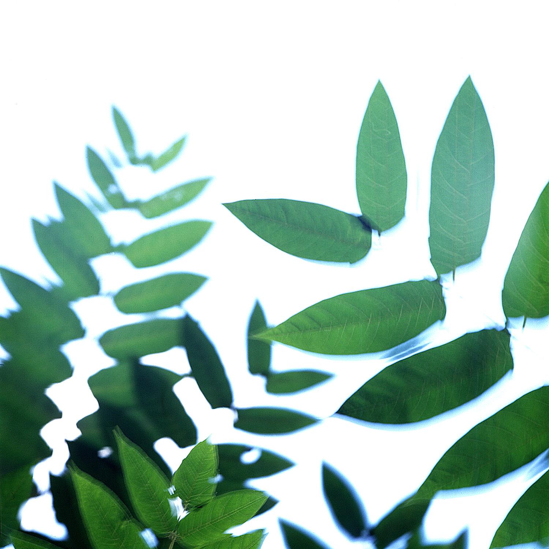 GreenStuff.jpg