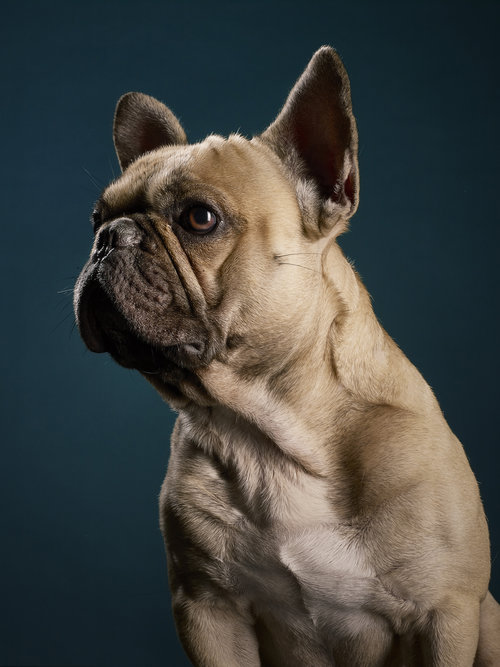 Dogs_Web_02.jpg