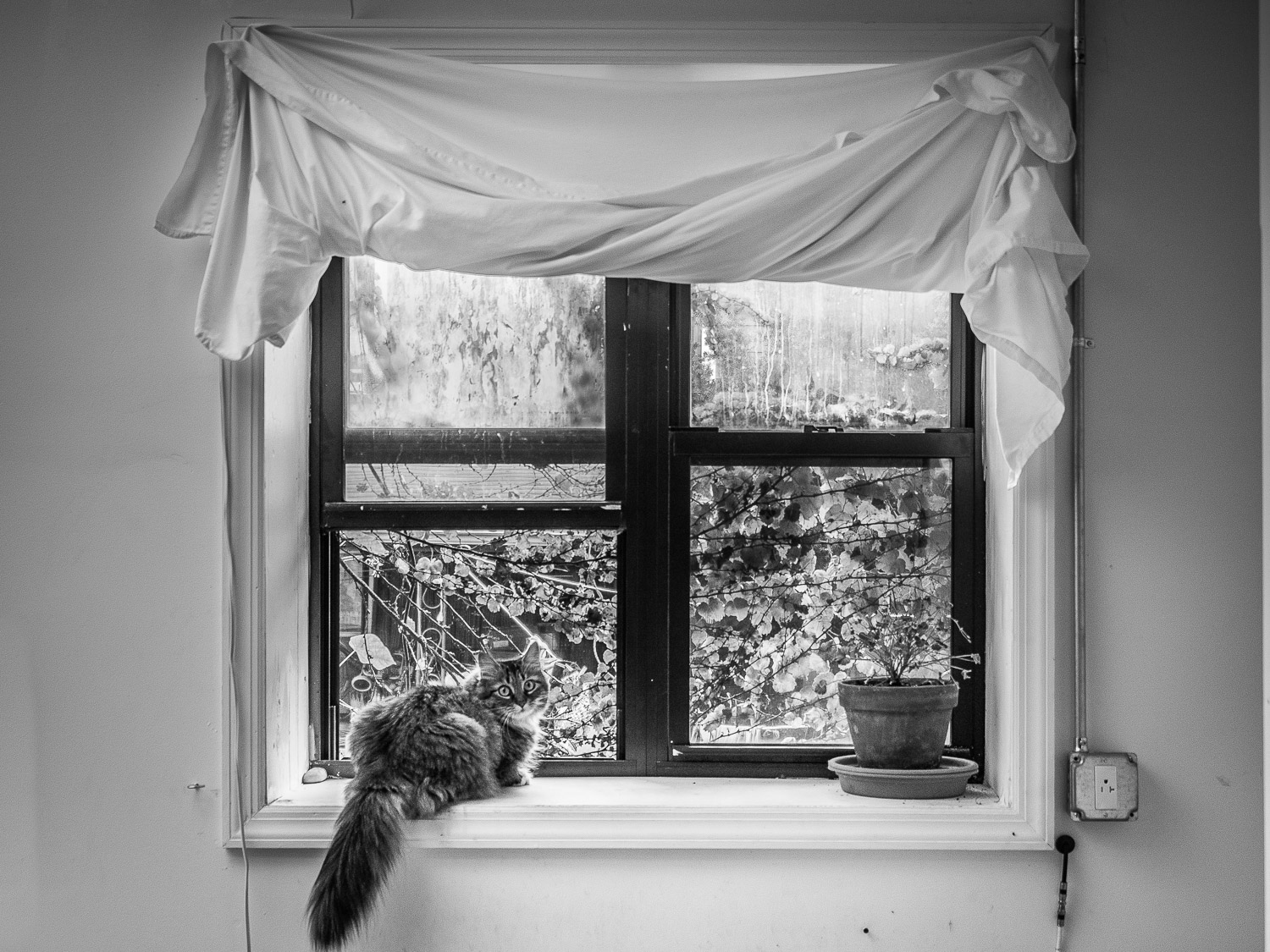 View of Live/Work Artist Studio in Greenpoint Brooklyn NYC with cat perched in window Neesh NYC