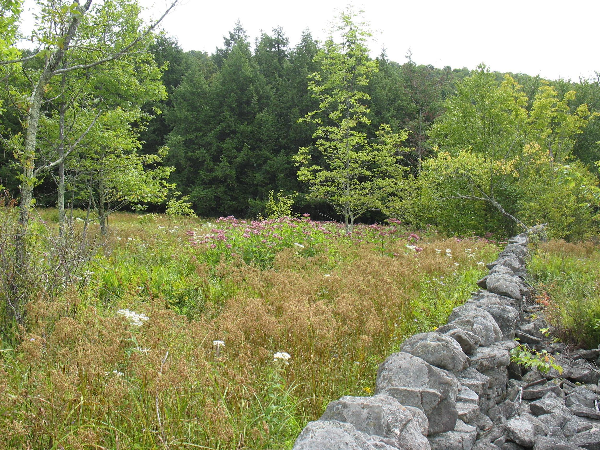 Herb meadow.jpg