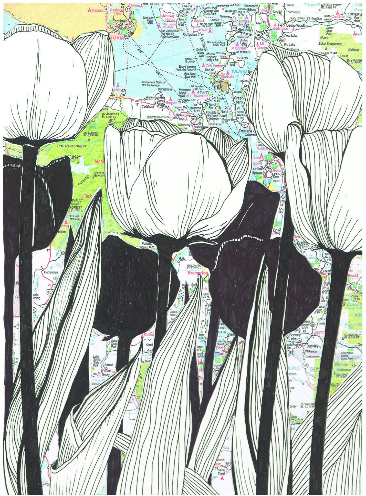 SARR_NW Tulips