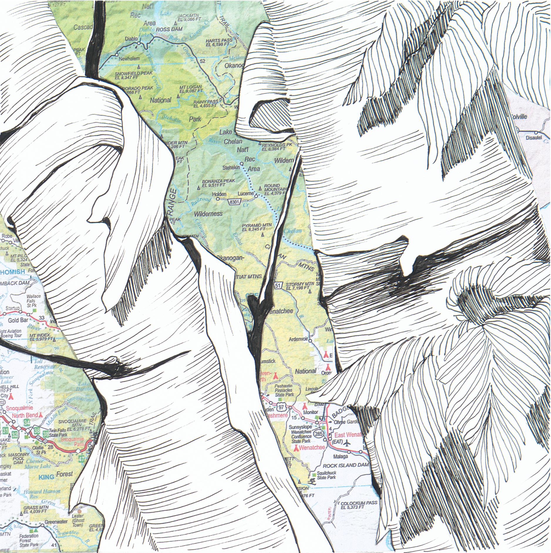 Birch Tree #3