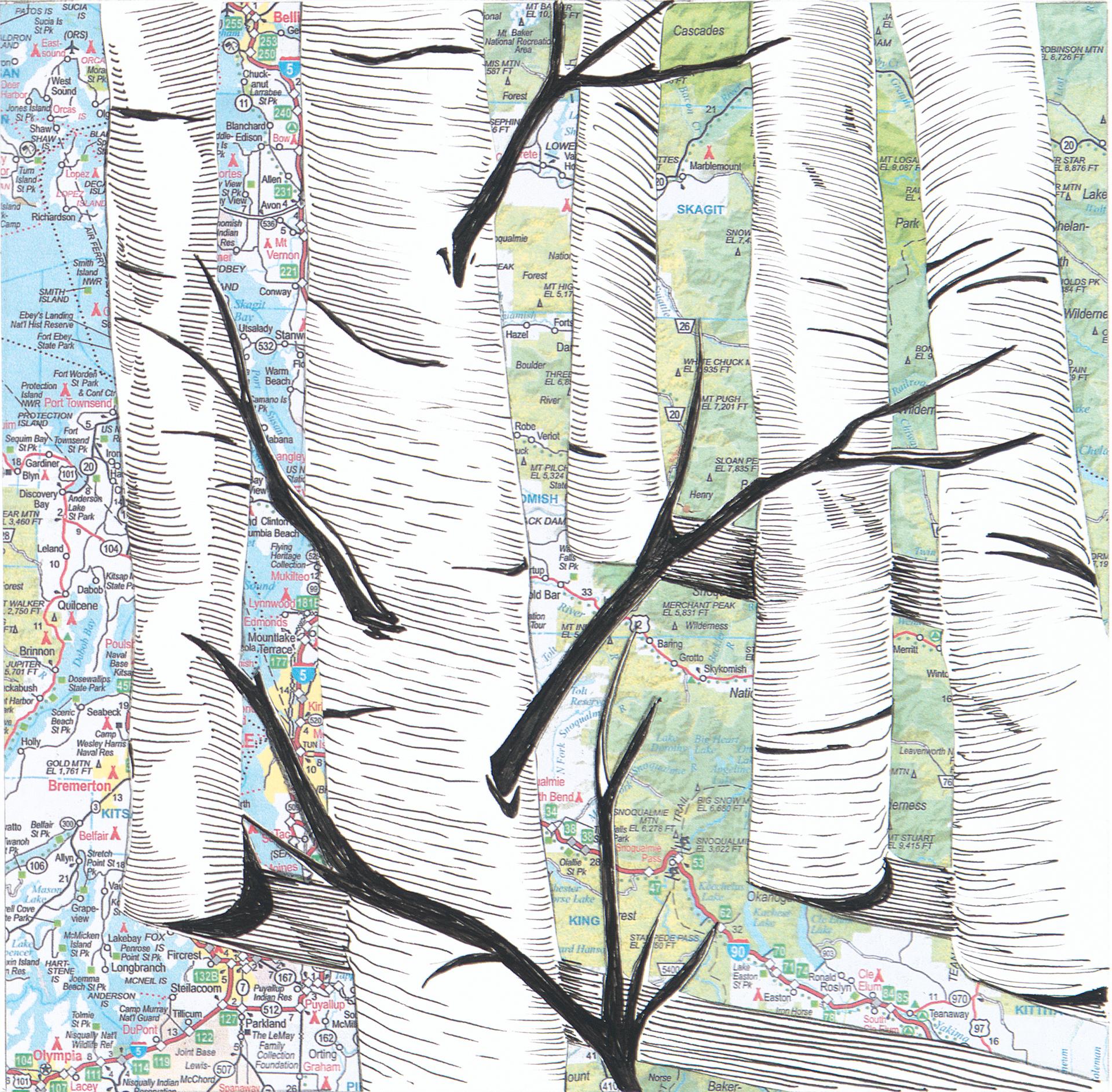 Birch Tree #6