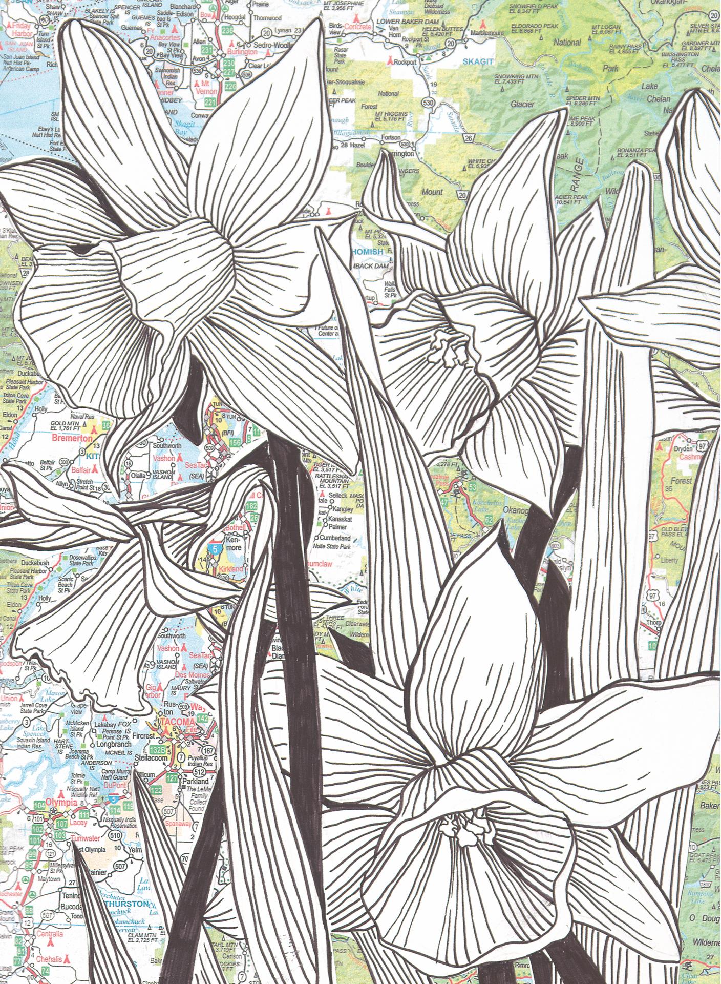 NW Daffodils