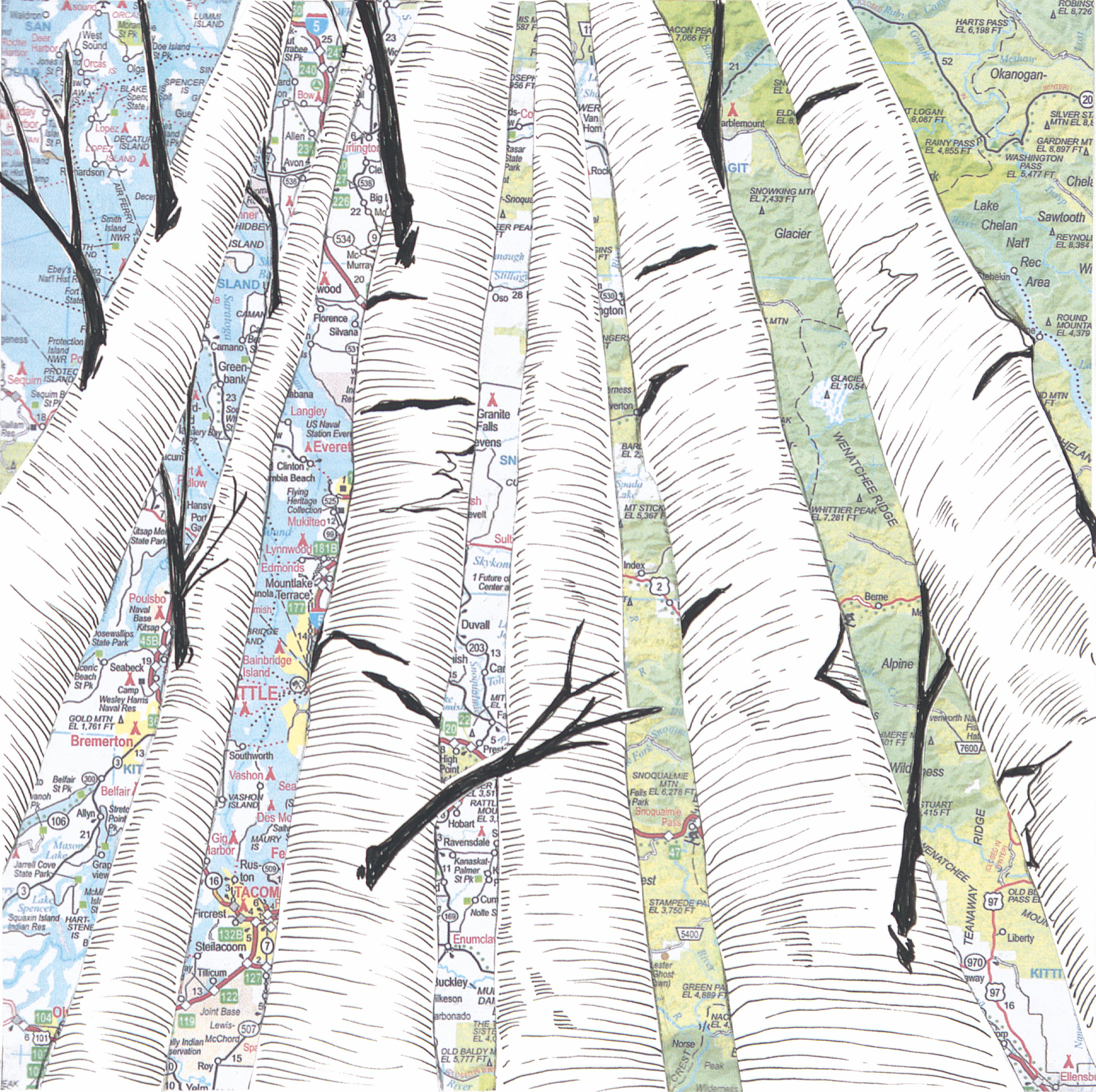 Birch Trees #5