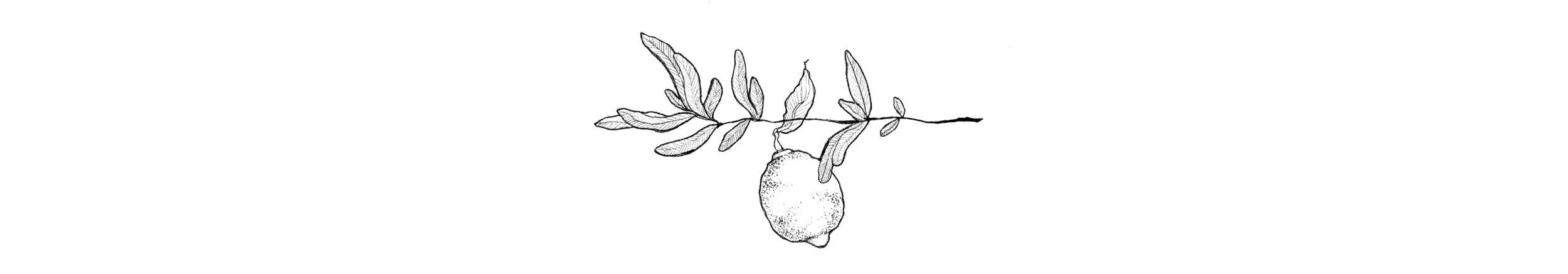 salvialimone logo