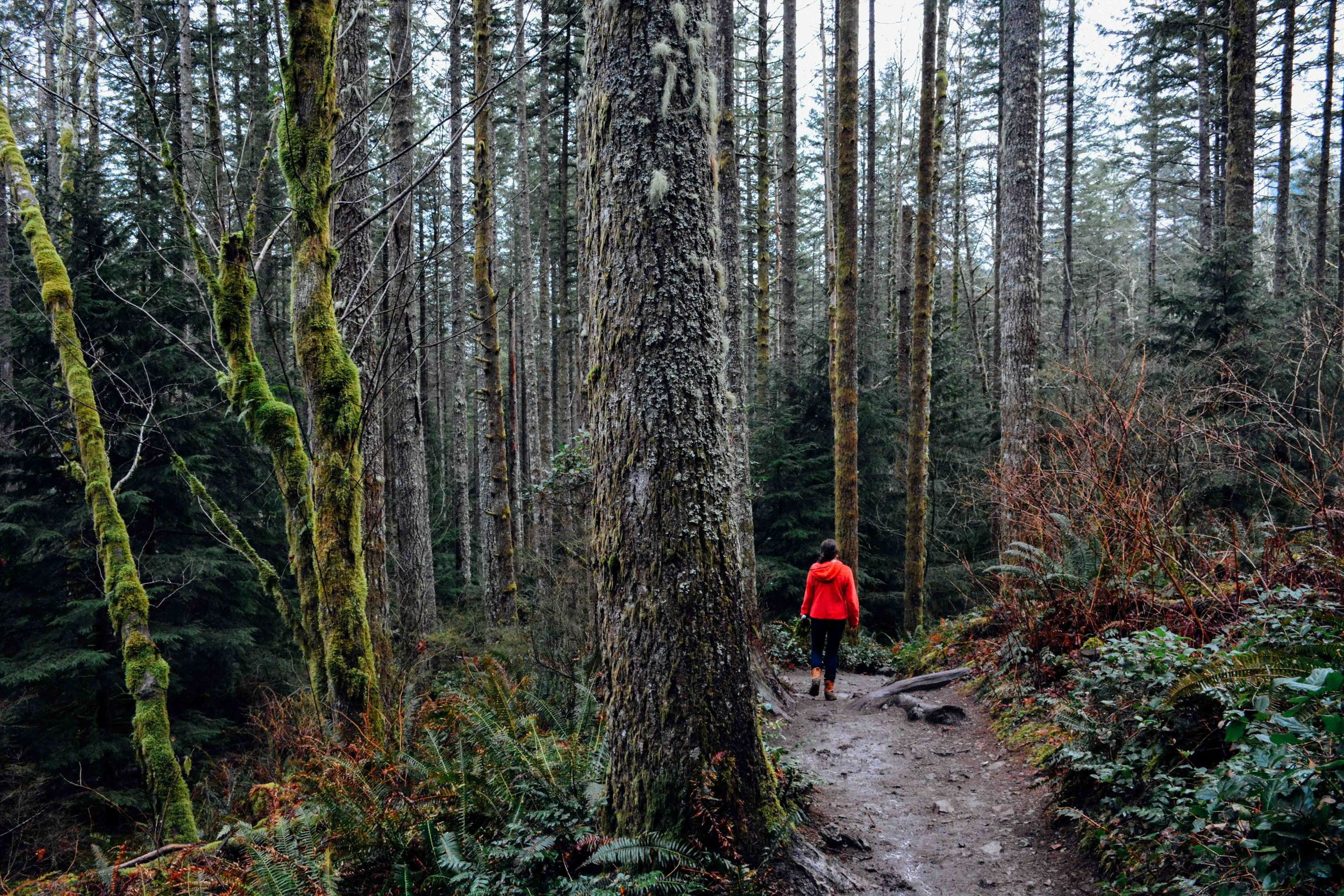A Hike in the Mossy Woods