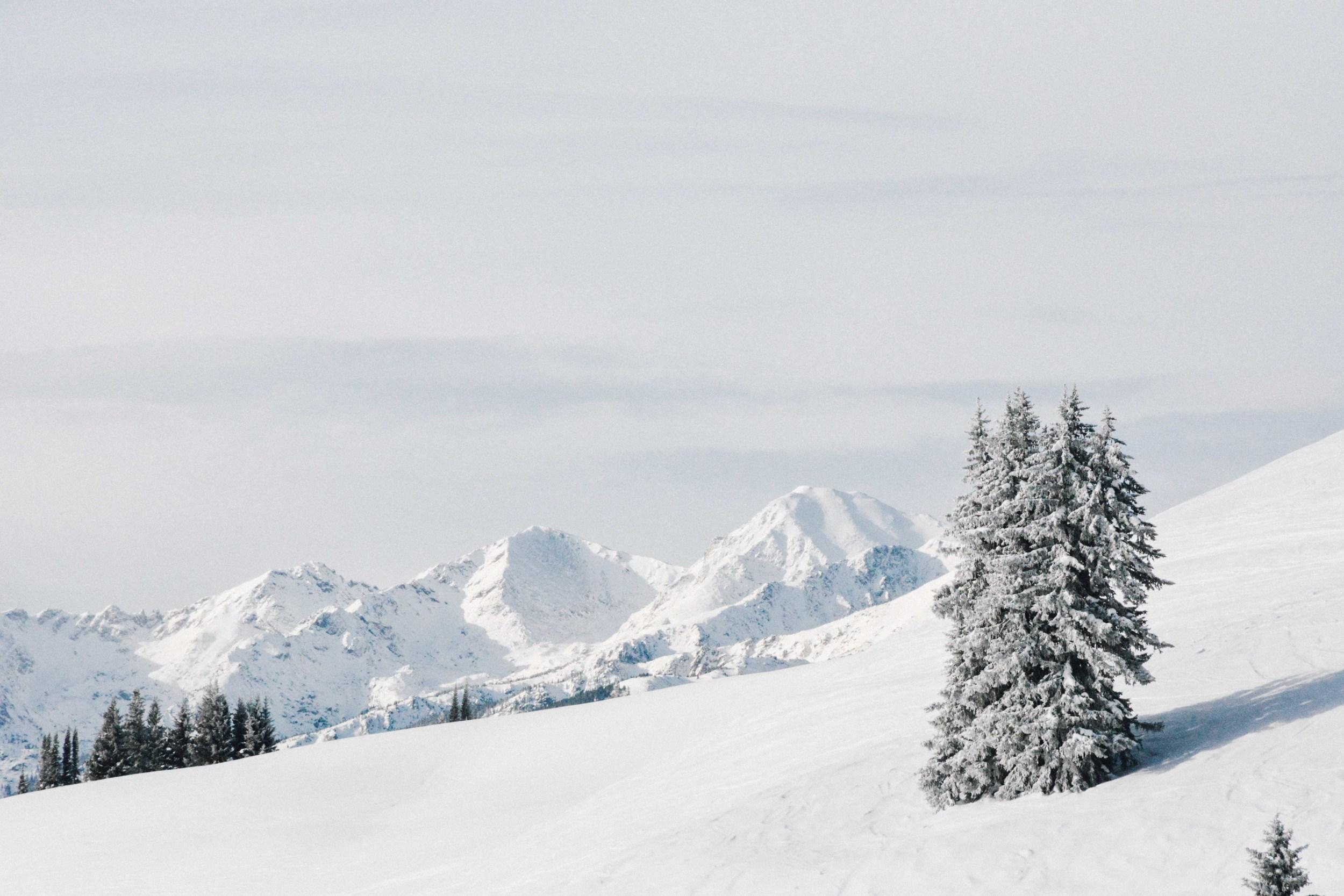 Powder Fields and Snowy Peaks
