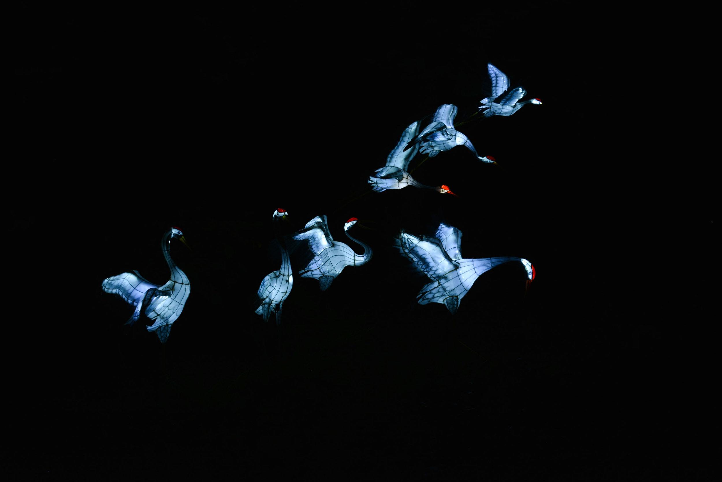 Jardins de lumière Montréal - Cranes