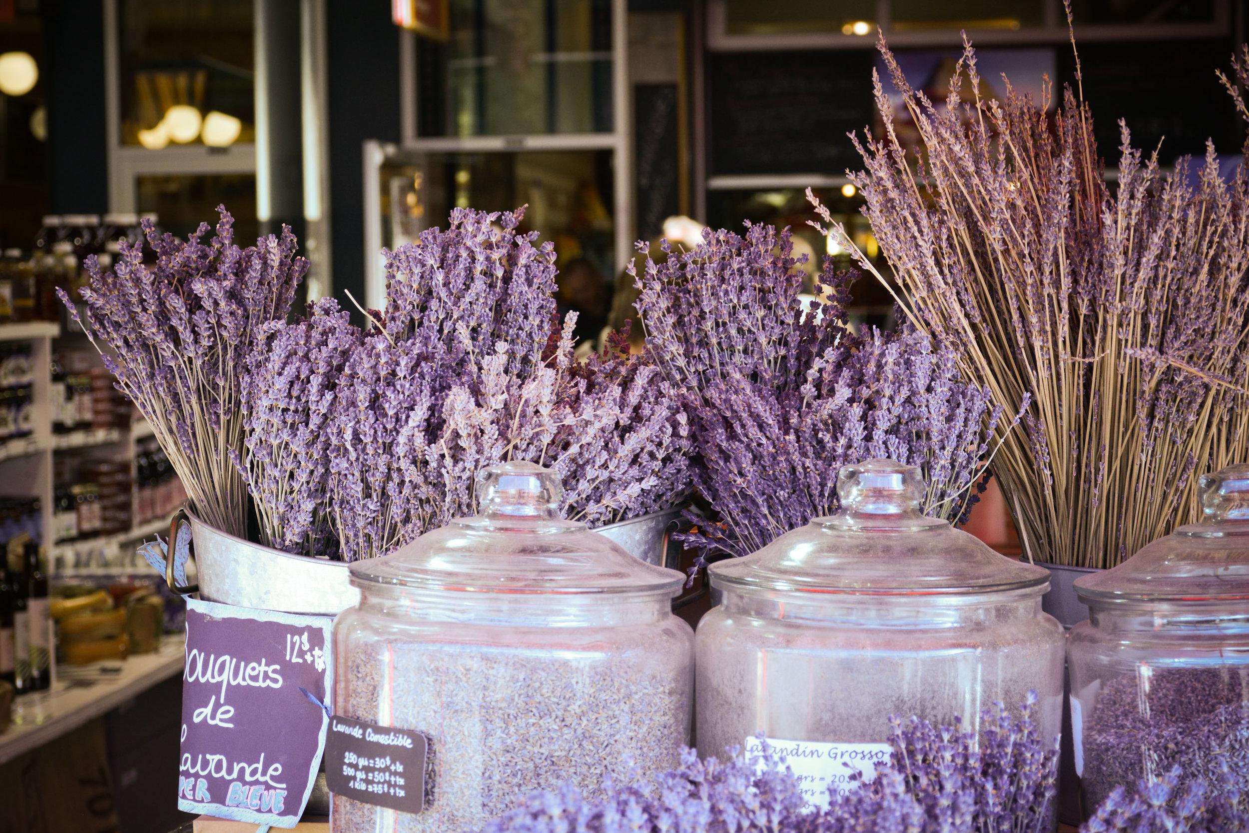 Marché Jean-Talon Montreal Lavender