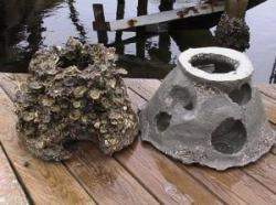 Oyster Domes help preserve the area's oyster population