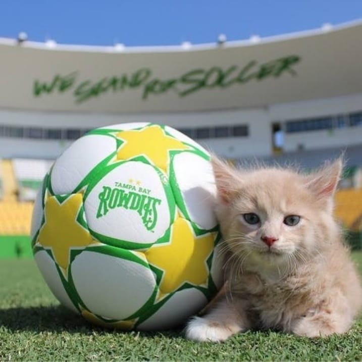 This is just a cute rowdies fan