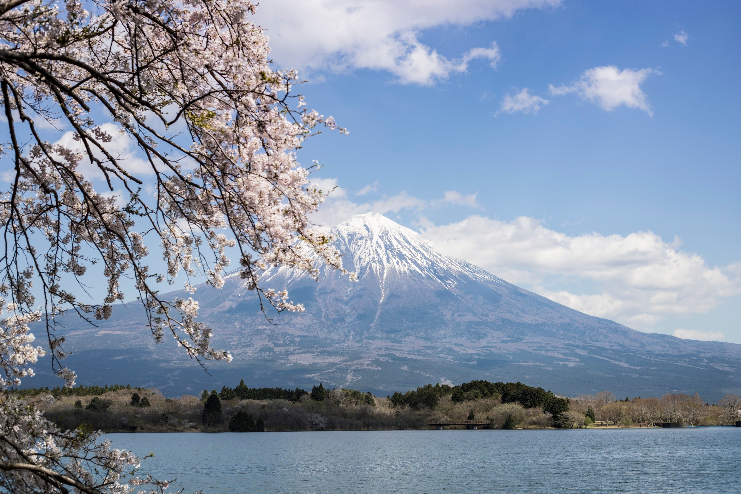 Cherry Blossom and Mt. Fuji, Japan