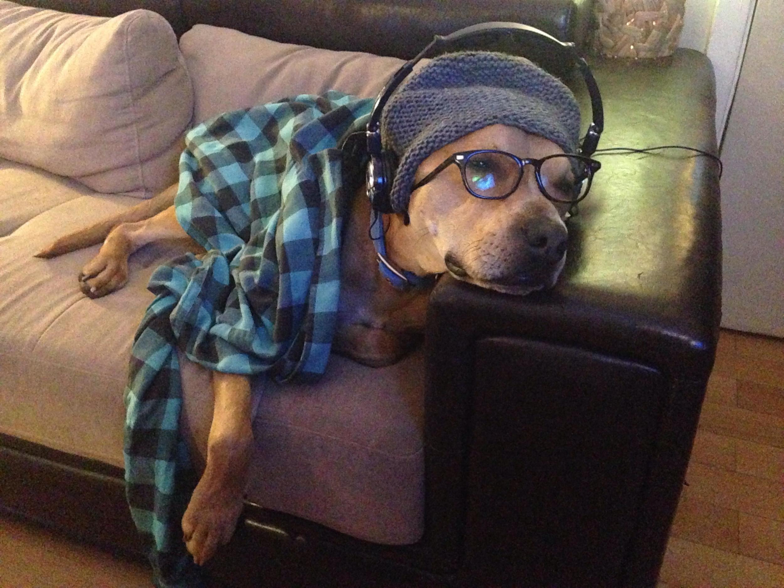 Dog lazing on a sofa listening to headphones